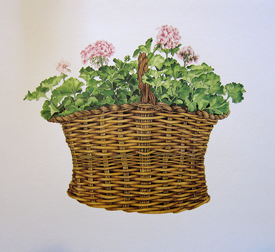 Basket of Geraniums Lithograph