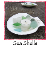 Sea Shells, set of 4